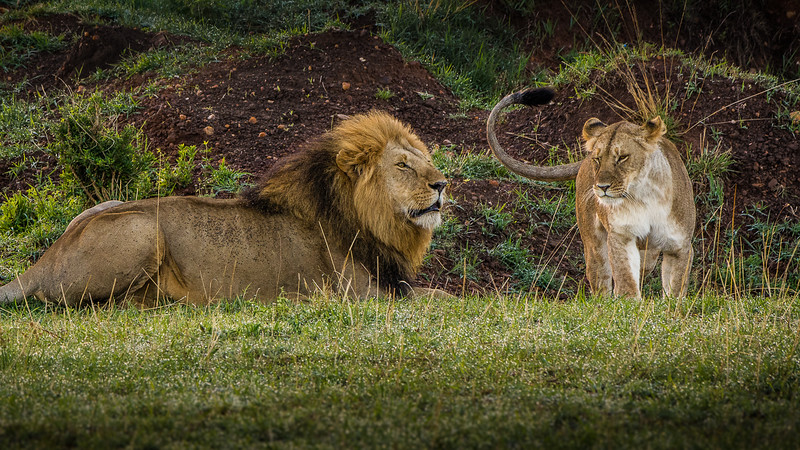 Lions-0125.jpg