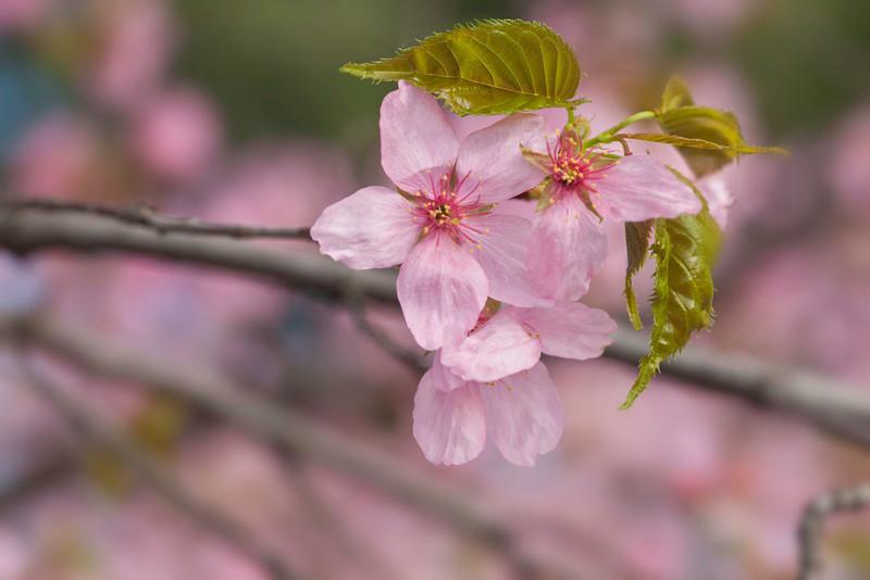 Spring12-1027-Edit copy.jpg