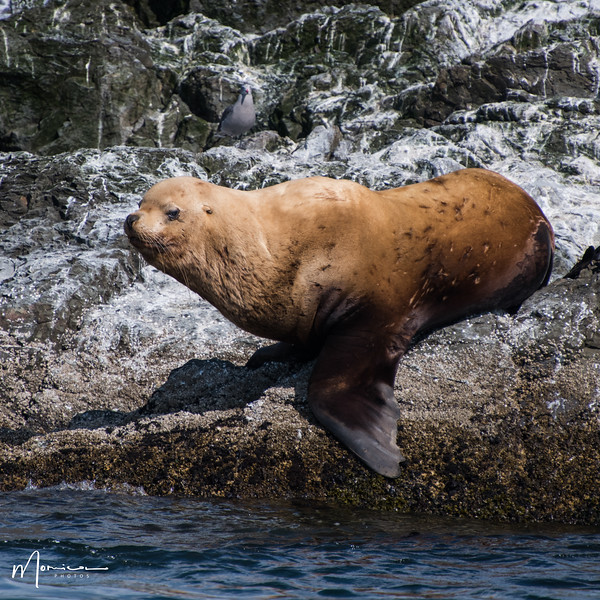 2019-08-31 - Whale Watching-2629_edit.jpg