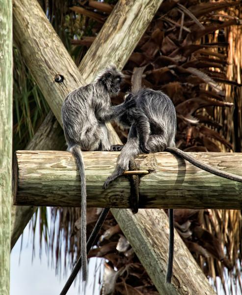 Lowary Park Zoo, Tampa, LF