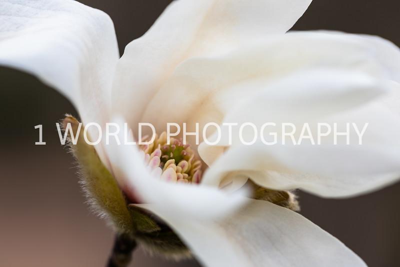 20190416Spring Flowers_Cantigny 4_17_19047--76.jpg