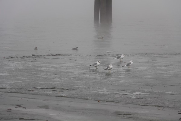 Fog on the Potomac