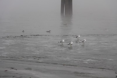 Fog on the Potomac