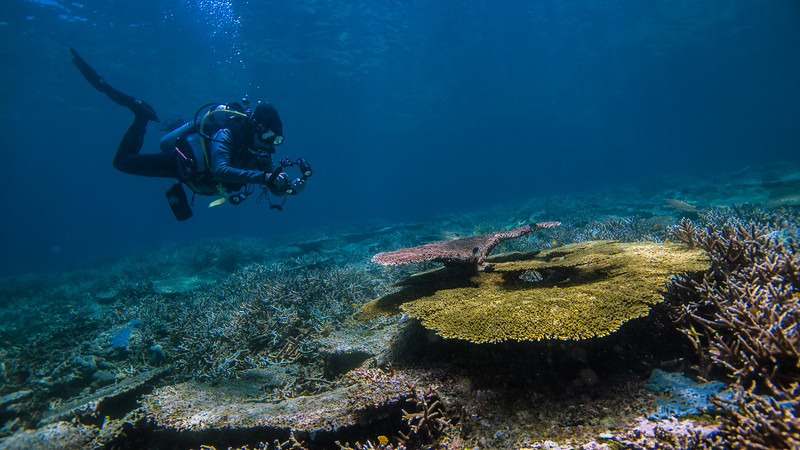 Taken from Tanjung Rum divesite in Tidore Island, North Maluku, Indonesia during our 8D7N excursion in March 2018