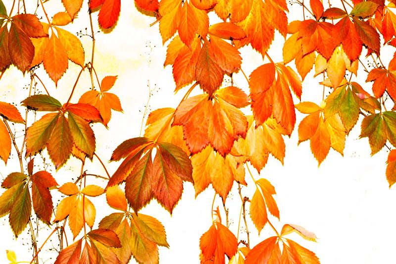 High-Key-Leaves.jpg