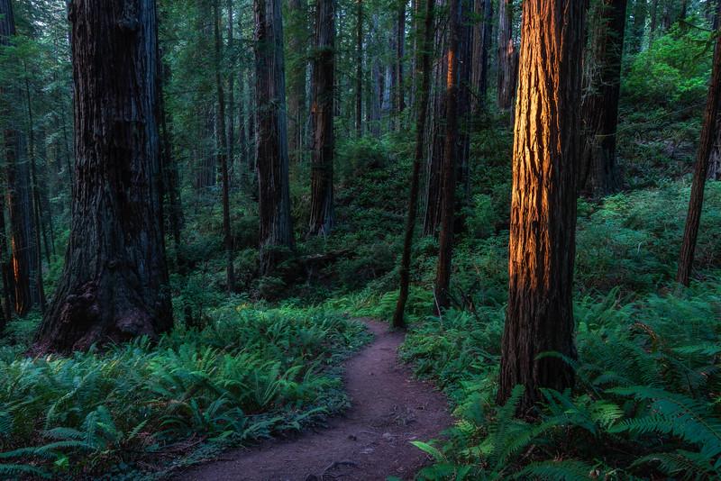 Damnation Trail