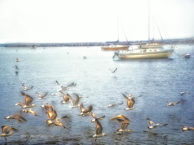 SEA GULLS IN FLIGHT BY SAIL BOAT  Final .jpg