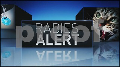 rabies-risk-high-in-east-texas