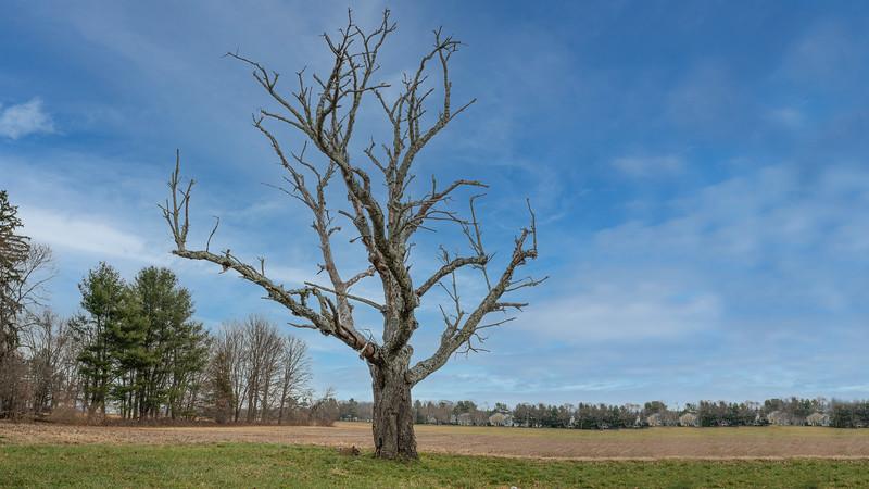 2020-12-08 Dead Tree-100.jpg