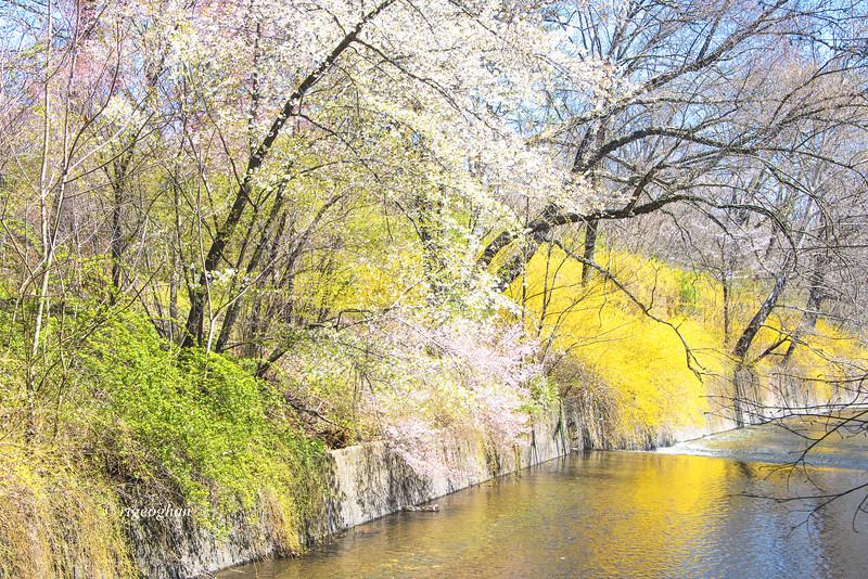 Branch Brook Park Spring Landscape II
