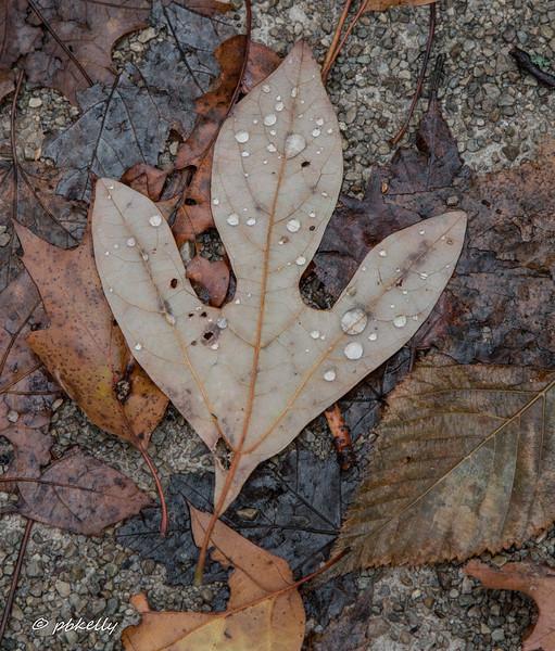 leaf 111917.jpg