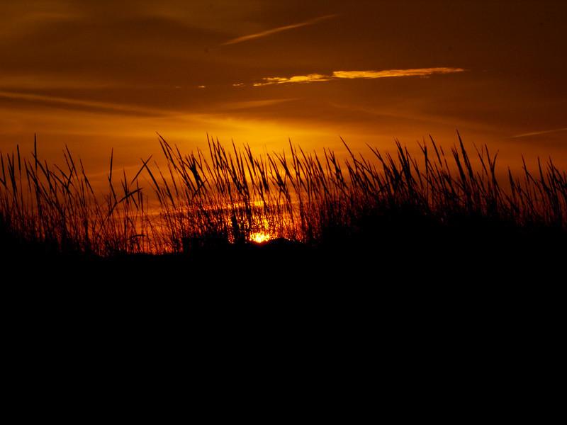 dune grass.jpg