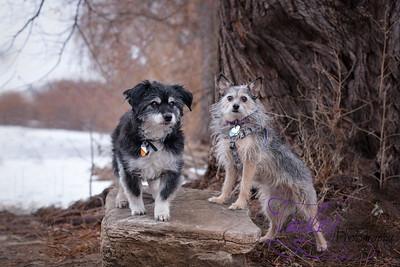 Wiggy & Foxy