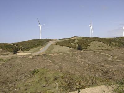 Palmy Windmills