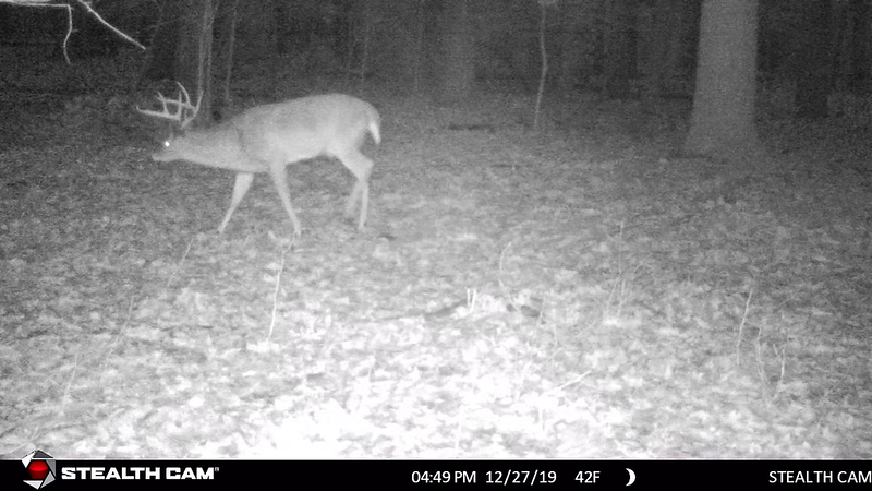 12-1-19 through 1-3-20...day time video of FISHER CAT...night video of giant 8-point buck...some good doe herd videos