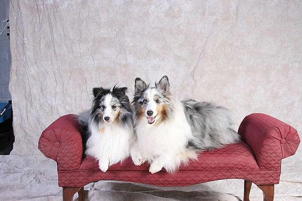 "DogFest ""06 to benefit Therapetics"