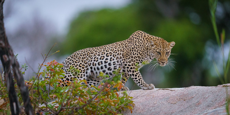 LeopardHills-20191029-2395.jpg
