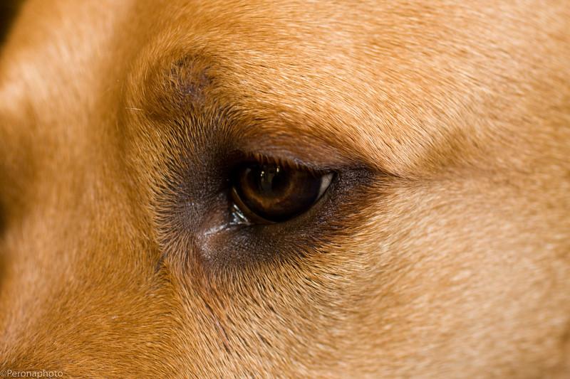 yule eye.jpg