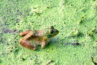 Murfree Spring Wetlands,  Murfreesboro  --  2008
