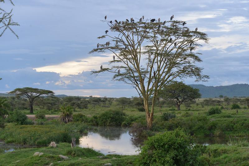 East Africa Safari 300.jpg