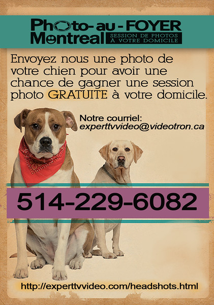 promo-dogs.jpg