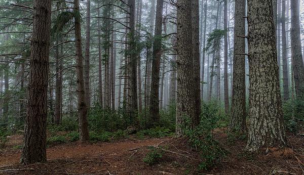 Dolason Hill Prairie Trail