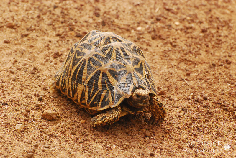 srilanka-animals-wm6.jpg