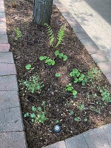 St. Joseph City Pollinator Gardens