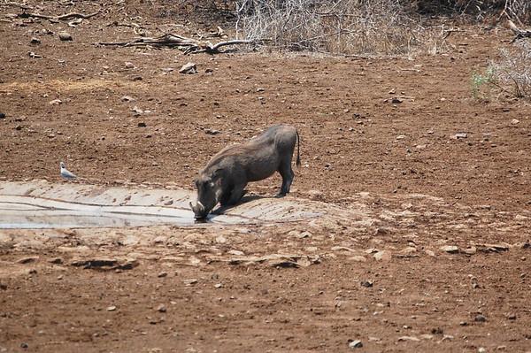 Kruger - Day 16 - Oct 28