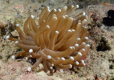Jellyfish Lake Dock - 3/27/13
