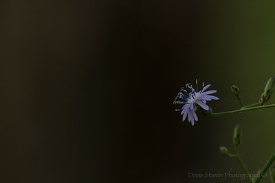 Flowers Georgia