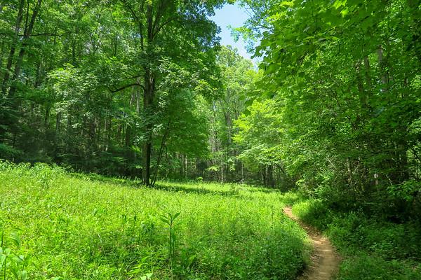 Fletcher Creek Trail (#350)
