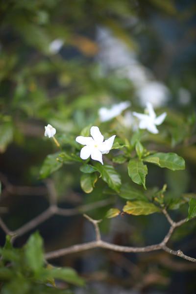 Kauai_D2_AM 147.jpg