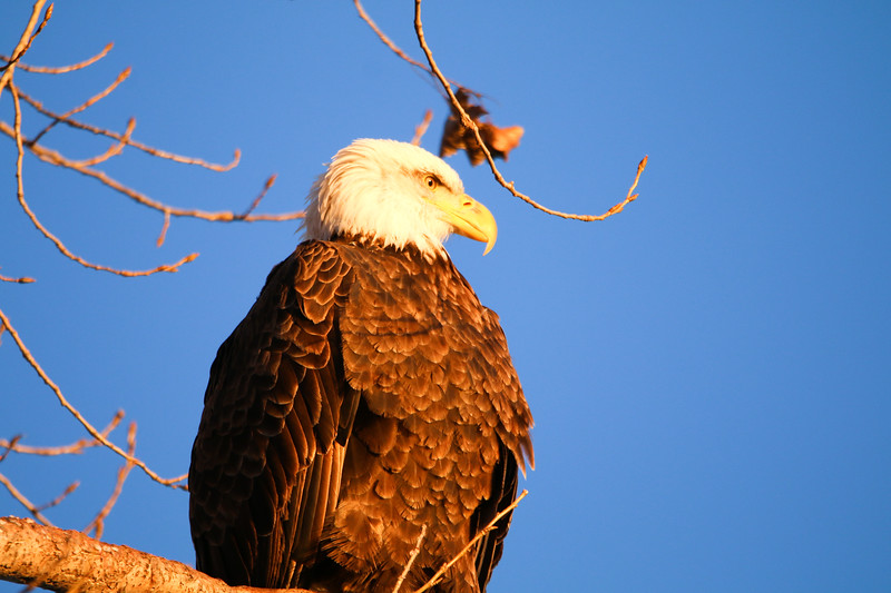 2-18-17 Eagle Final-16.jpg