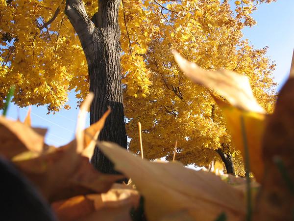 Scenery Fall 2008
