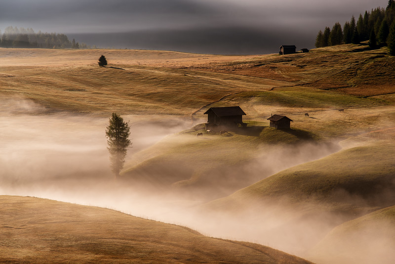 Detail from morning shoot in Alpe di Siusi