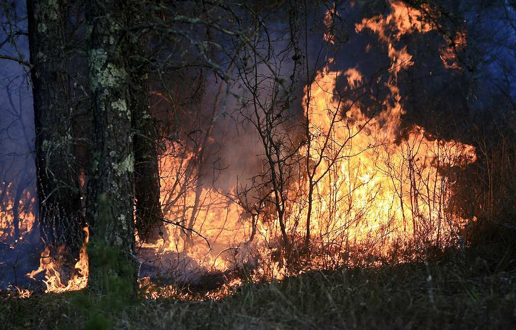 . A wildfire actively burns through the forest in Highland Township, Wis. (Duluth News-Tribune: Clint Austin)