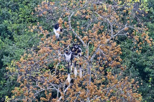 Uganda's Kabale, Semliki & Queen Elizabeth National Park