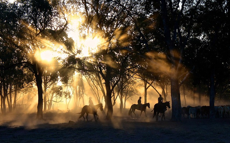 Queensland Australia horseback riding