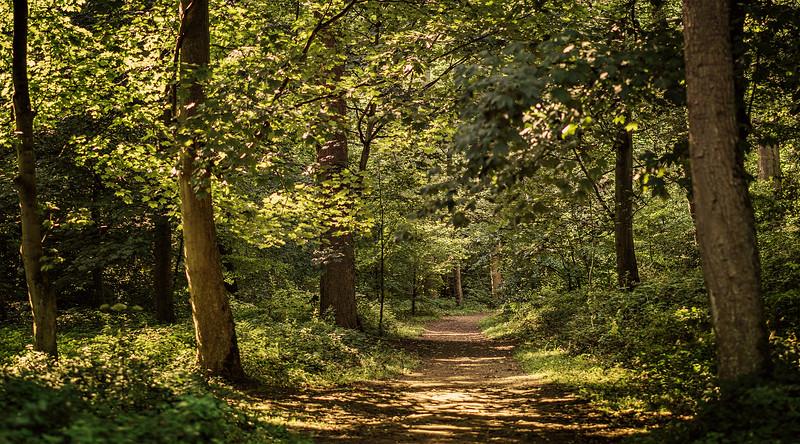 Forest Shadows-146.jpg
