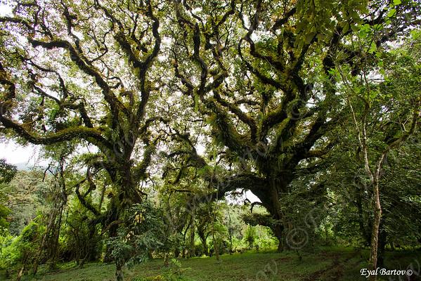 Bale & Harena Natural Forest