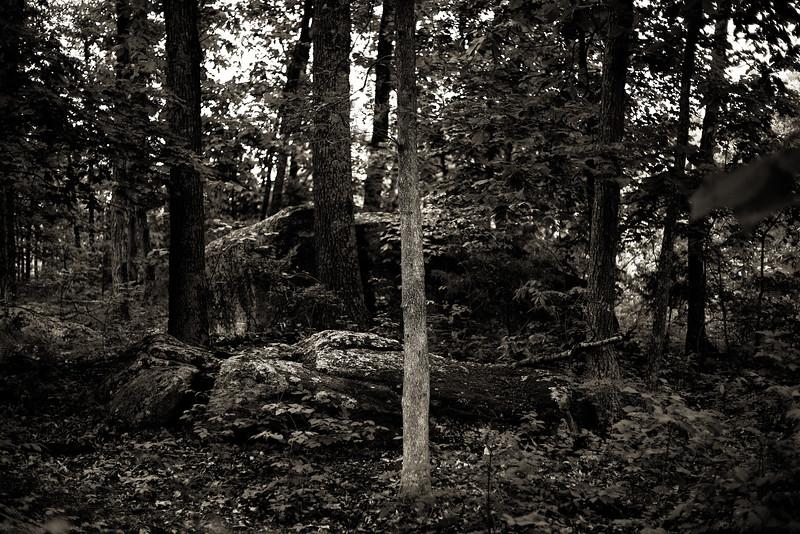 Granite Forest