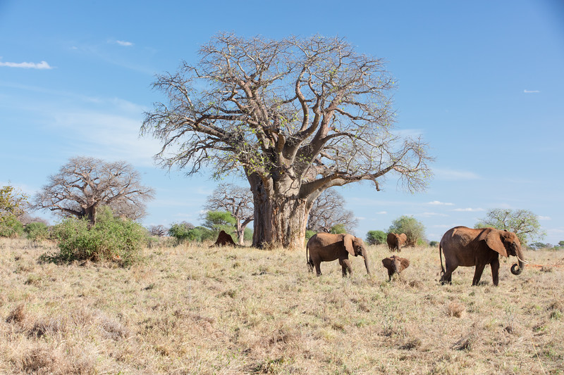 Africa - 102016 - 7927.jpg