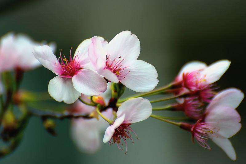 Verdala Bloom_DSC9185 - Version 2.jpg