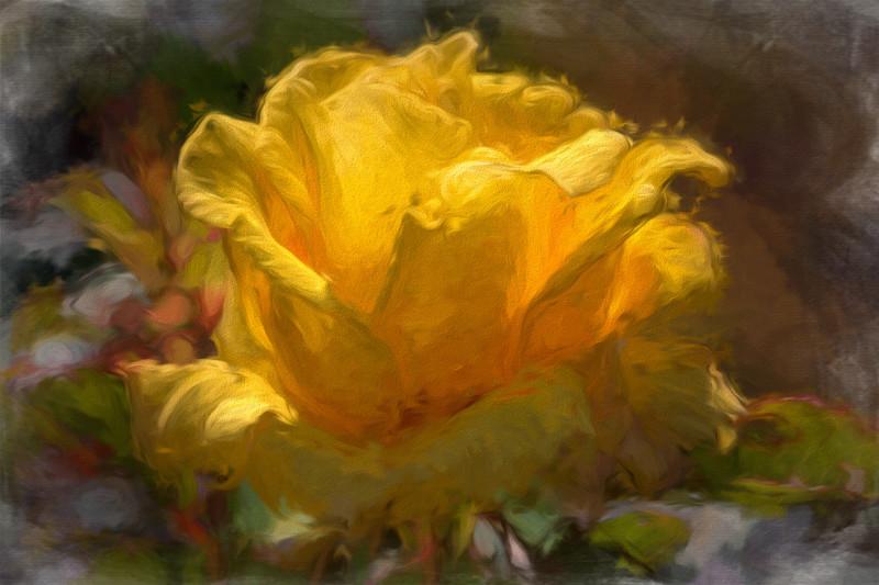 June 5 - Yellow rose in bloom.jpg