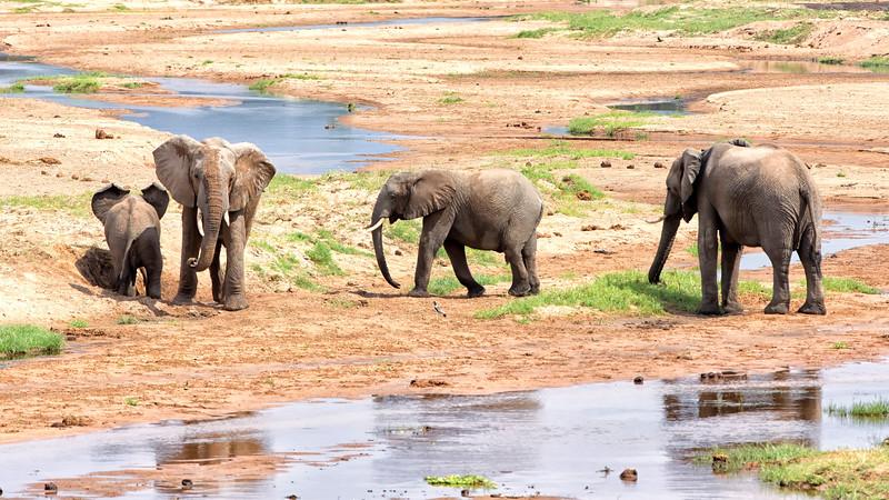 Elephants on the Ruaha river