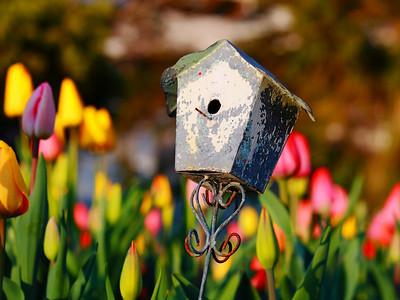 Springtime Wonder!
