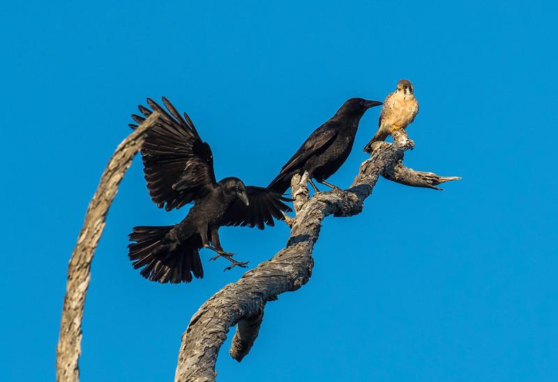 HNBH Birds1-29.jpg