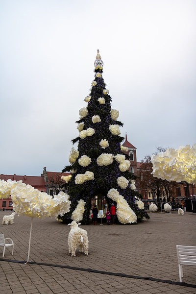 Close-up of the tree