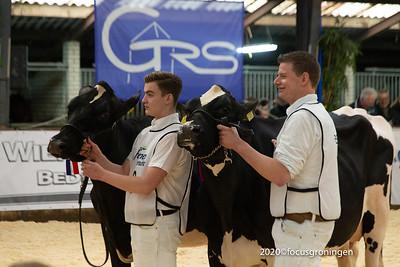 Dieren Koeien 2020 Rundveeshow Groningen